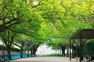arbre_en_tete-montpellier